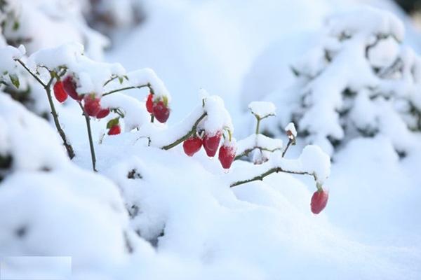 Tuyết rơi tuyệt đẹp ở Sapa